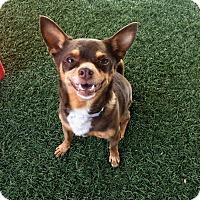 Adopt A Pet :: Spencer - Valencia, CA