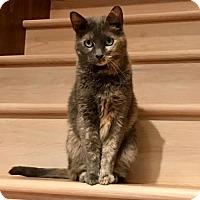 Adopt A Pet :: Irian - Battle Ground, WA