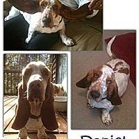 Adopt A Pet :: Daniel - Marietta, GA