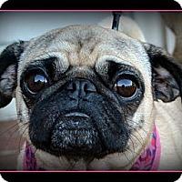Adopt A Pet :: Rozie-VA - Mays Landing, NJ