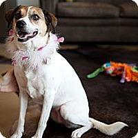 Adopt A Pet :: Brandi - Nashville, TN