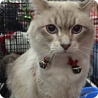Adopt A Pet :: Leonardo Decatpio - Harrisburg, NC