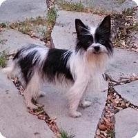 Adopt A Pet :: Cookie - Toledo, OH