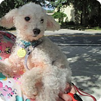Adopt A Pet :: CHERRY - Melbourne, FL