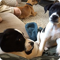 Adopt A Pet :: Gabby  & Grayson - EDEN PRAIRIE, MN