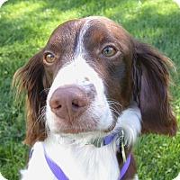 Adopt A Pet :: Max - Buffalo, NY