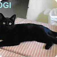 Adopt A Pet :: Yogi - Medway, MA