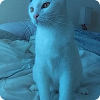 Adopt A Pet :: Violet - Orlando, FL