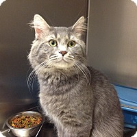 Adopt A Pet :: B-11 George - Triadelphia, WV