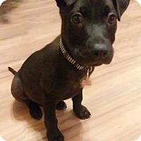Adopt A Pet :: Buddy - San Ysidro, CA