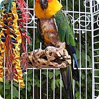 Adopt A Pet :: JAZZ - Mantua, OH