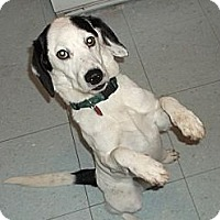 Adopt A Pet :: Tidbit - Hamilton, ON