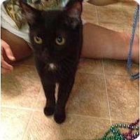 Adopt A Pet :: Lucy - Mobile, AL