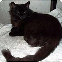 Adopt A Pet :: DeDe - Catasauqua, PA