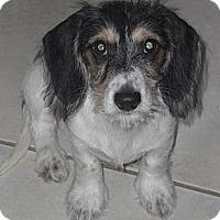 Adopt A Pet :: Squeeky - Rescue, CA