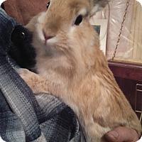 Adopt A Pet :: Princess - Portland, ME