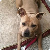 Adopt A Pet :: Molly - Kimberton, PA