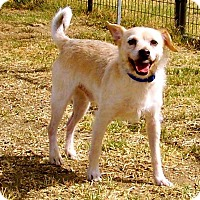 Adopt A Pet :: Indy - Weimar, CA