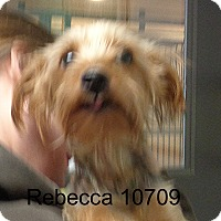 Adopt A Pet :: Rebecca - Greencastle, NC