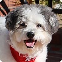 Adopt A Pet :: Barney - La Costa, CA
