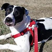 Adopt A Pet :: Maya - Denton, TX