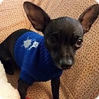 Adopt A Pet :: Tia - Sacramento, CA