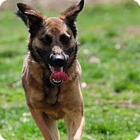 Adopt A Pet :: Panzer - Greeneville, TN
