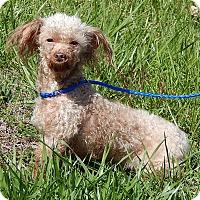 Adopt A Pet :: Charlotte (7 lb) Precious Baby - SUSSEX, NJ