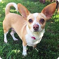Adopt A Pet :: Hana - San Diego, CA