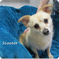 Adopt A Pet :: Scooter - Bartonsville, PA