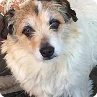 Adopt A Pet :: Felicity - McKinney, TX