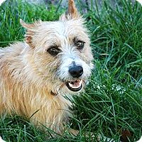 Adopt A Pet :: Duke - Oakland, CA