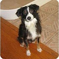 Adopt A Pet :: Pepper - Orlando, FL
