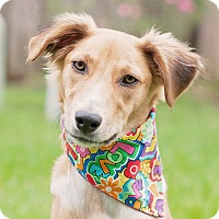 Adopt A Pet :: Jolee - Kingwood, TX