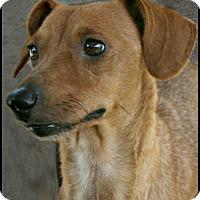 Adopt A Pet :: Ann - Lufkin, TX
