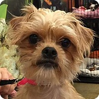 Adopt A Pet :: Gigi - geneva, FL