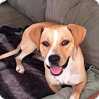 Adopt A Pet :: Quinn - Franklinville, NJ