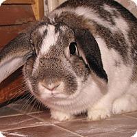 Adopt A Pet :: Mary - Warren, MI