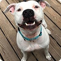 Adopt A Pet :: Rudy - Calgary, AB