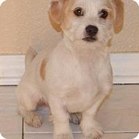 Adopt A Pet :: Half Pint - Palo Alto, CA