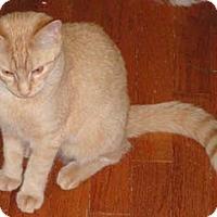 Adopt A Pet :: Shell - Merrifield, VA