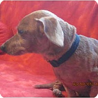 Adopt A Pet :: Max - Afton, TN
