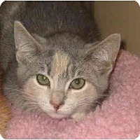Adopt A Pet :: Angelina - Jenkintown, PA