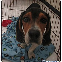 Adopt A Pet :: Cooper - Beaumont, TX