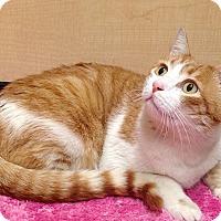 Adopt A Pet :: Calvin - Foothill Ranch, CA