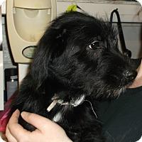 Adopt A Pet :: Tom - Geneseo, IL