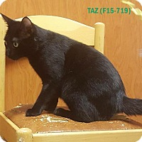Adopt A Pet :: TAZ - Tiffin, OH