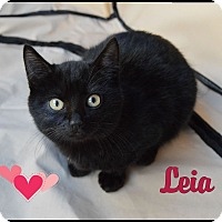 Adopt A Pet :: Leia - Sherman Oaks, CA