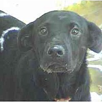 Adopt A Pet :: TG-Daisy - Tyler, TX