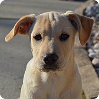 Adopt A Pet :: Whisper - Plainfield, CT
